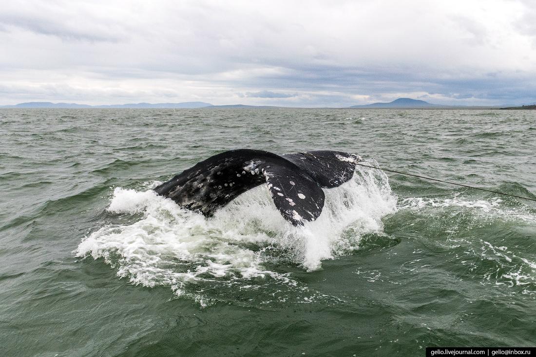 уэлен, самый восточный населенный пункт, чукотка, хвост кита