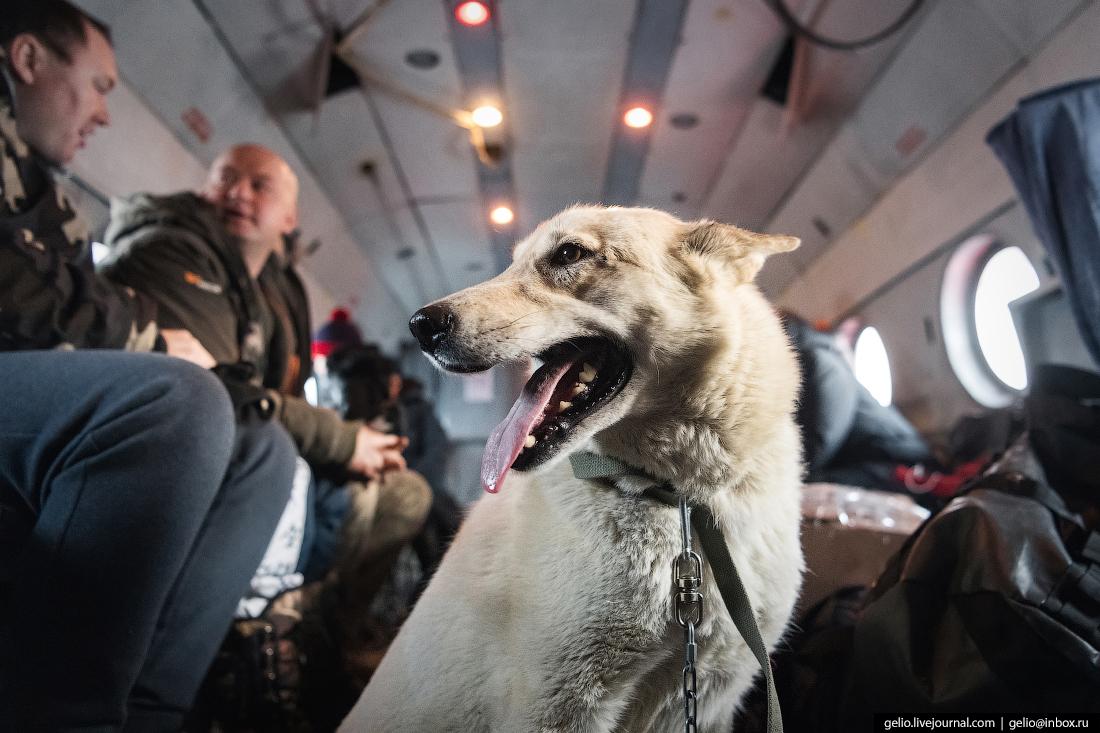 собака в салоне вертолёта Ми-8, Красавиа