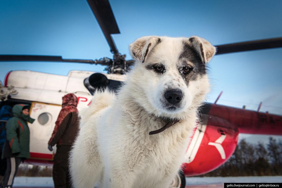 собака у вертолёта Ми-8, Красавиа