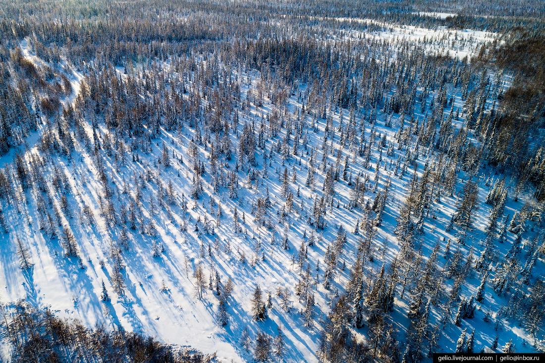 Салехард с высоты, леса, ямал