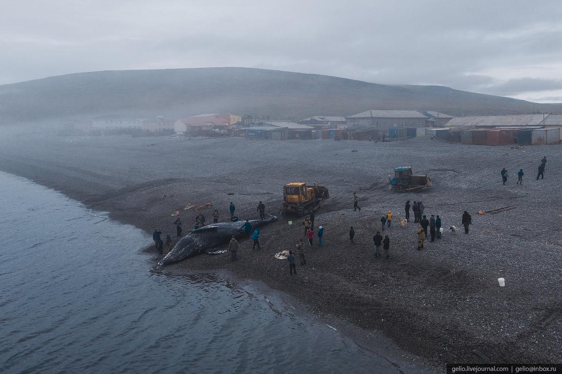 уэлен, самый восточный населенный пункт, чукотка, мертвый кит, охота, китобои