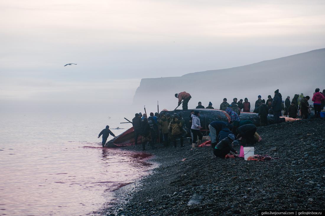 уэлен, самый восточный населенный пункт, чукотка, кит мертвый