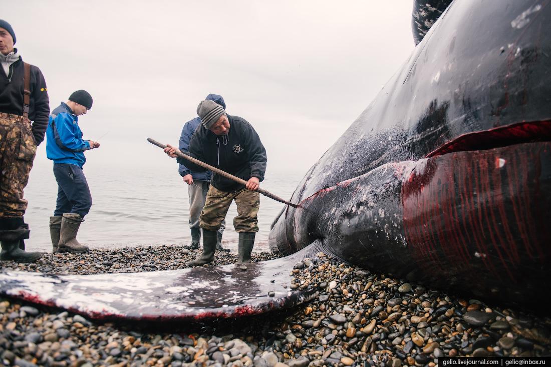 уэлен, самый восточный населенный пункт, чукотка, мертвый кит