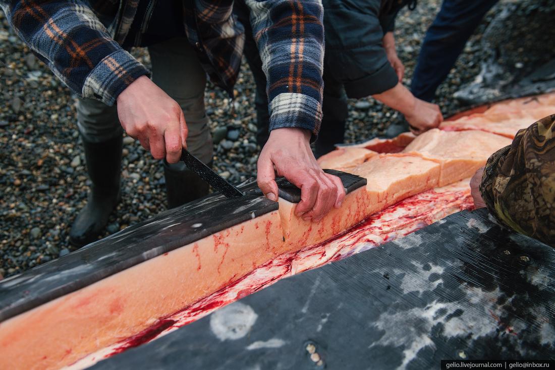 уэлен, самый восточный населенный пункт, чукотка, китовое мясо