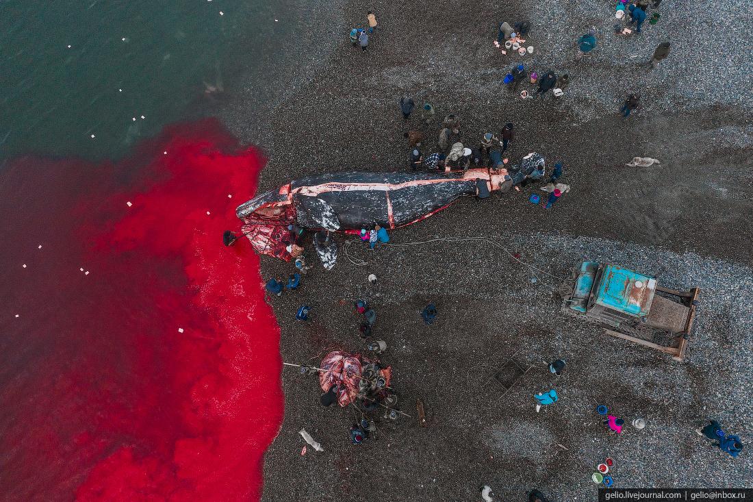уэлен, самый восточный населенный пункт, чукотка, мертвый кит, кровь, китобои, разделование